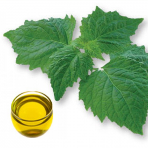 """<span class=""""entry-title-primary"""">Global Patchouli Oil Market Projections, SWOT Analysis, Risk Analysis, Trends And Forecast By 2025 – Market Research Report 2018</span> <span class=""""entry-subtitle"""">Global Patchouli Oil Device Market To Show Impressive Growth Of CAGR During The Period 2018- 2025</span>"""