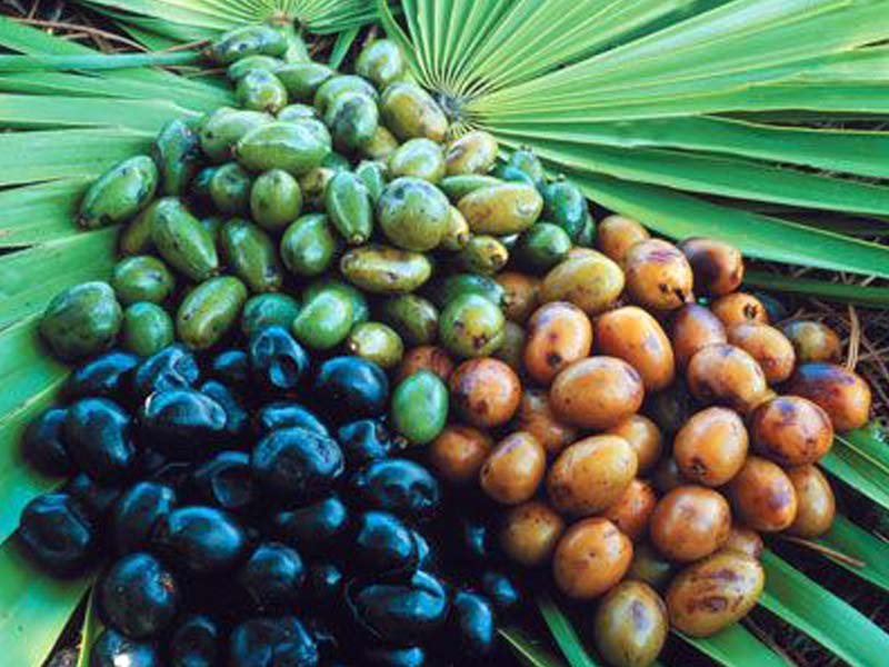 "<span class=""entry-title-primary"">Saw Palmetto Extract Market Status, Forecast by Players, Types And Applications</span> <span class=""entry-subtitle"">Global Saw Palmetto Extract Market Report</span><span class=""rating-result after_title mr-filter rating-result-34888"" itemscope itemtype=""http://schema.org/AggregateRating"">	<span class=""mr-star-rating"">			    <i class=""fa fa-star mr-star-full""></i>	    	    <i class=""fa fa-star mr-star-full""></i>	    	    <i class=""fa fa-star mr-star-full""></i>	    	    <i class=""fa fa-star mr-star-full""></i>	    	    <i class=""fa fa-star mr-star-full""></i>	    </span><span class=""star-result"">	<span itemprop=""ratingValue"">5</span>/<span itemprop=""bestRating"">5</span></span>			<span class=""count"">				(<span itemprop=""ratingCount"">1</span>)			</span>			<span itemprop=""itemReviewed"" itemscope itemtype=""http://schema.org/Thing""><meta itemprop=""name"" content=""Saw Palmetto Extract Market Status, Forecast by Players, Types And Applications"" /></span></span>"
